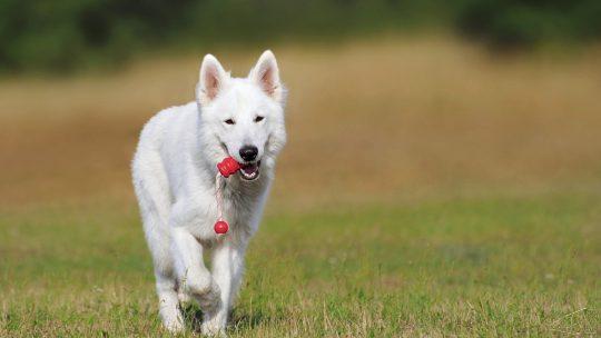 Beeztees: voor de verzorging van uw hond
